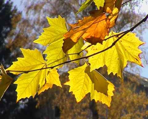 Für einen Goldenen Herbst