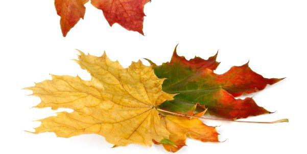 Der Herbst, der Herbst, der Herbst ist da, er bringt uns Wind, hei hussassa! Schüttelt ab die Blätter, bringt uns Regenwetter…